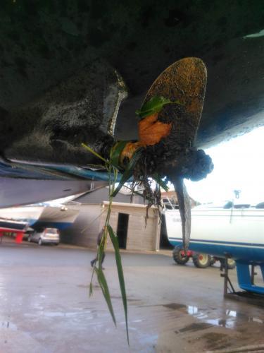 watersportcentrum-de-stormvogel-warns-wekplaats-volle-schroef-bij-kranen-01
